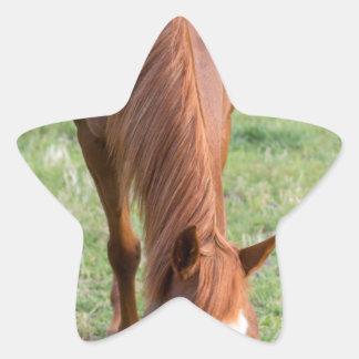 Arabian Brown Horse Front Standing Perfect Mane Star Sticker