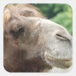 Arabian Camel Stickers