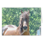 Arabian Distinguished Gentleman Photo-1 Greeting Cards