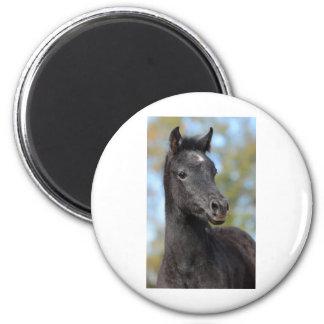 Arabian Filly Fridge Magnet