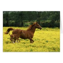 Arabian foal and mare running through