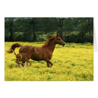 Arabian foal and mare running through card