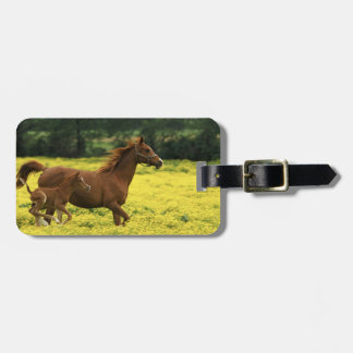 Arabian foal and mare running through tags for bags