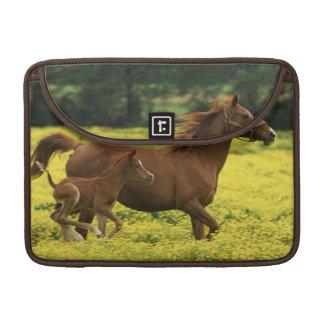 Arabian foal and mare running through MacBook pro sleeves