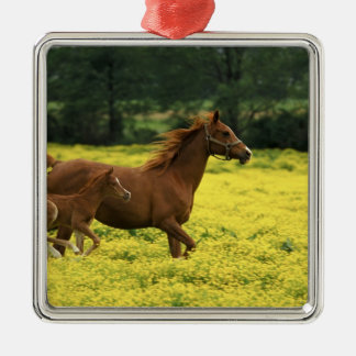 Arabian foal and mare running through metal ornament