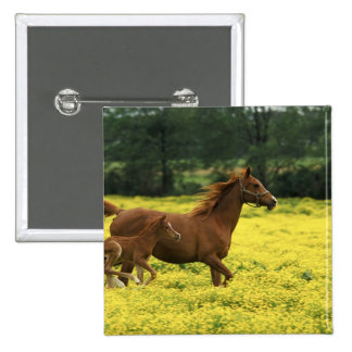Arabian foal and mare running through pinback button