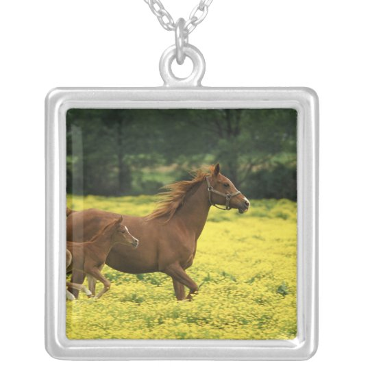 Arabian foal and mare running through silver plated necklace