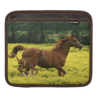 Arabian foal and mare running through sleeve for iPads