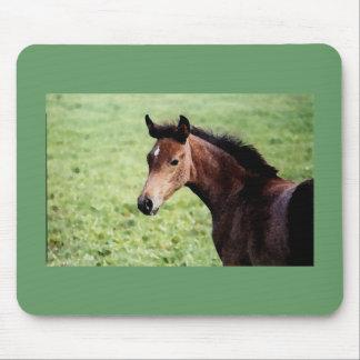 Arabian foal mouse pad