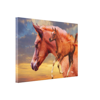 Arabian foal sunset Stretched Canvas Print
