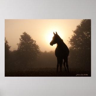 Arabian horse at Sunrise Poster