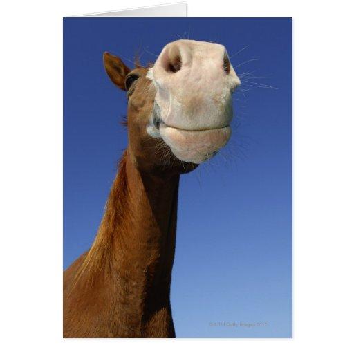 Arabian Horse, Bavaria, Germany Card