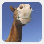 Arabian Horse, Bavaria, Germany Square Stickers