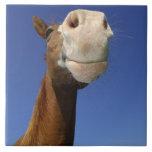 Arabian Horse, Bavaria, Germany Tiles