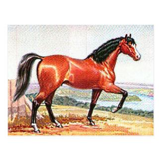 Arabian Horse Brown Bay Vintage Painting Post Card