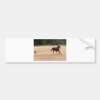Arabian Horse Brown Running Around Training Bumper Sticker