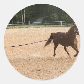 Arabian Horse Brown Running Around Training Classic Round Sticker