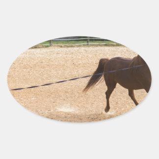 Arabian Horse Brown Running Around Training Oval Sticker
