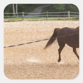 Arabian Horse Brown Running Around Training Square Sticker