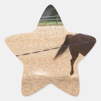 Arabian Horse Brown Running Around Training Star Sticker