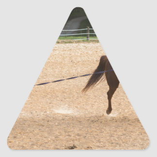 Arabian Horse Brown Running Around Training Triangle Sticker