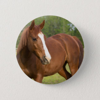 Arabian Horse Brown Side Profile in Pasture Button