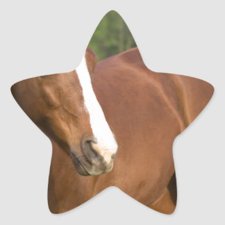 Arabian Horse Brown Side Profile in Pasture Star Sticker