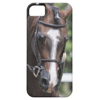 Arabian Horse Case