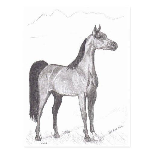 Arabian Horse in Pencil Postcards