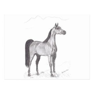 Arabian Horse in Pencil Postcard