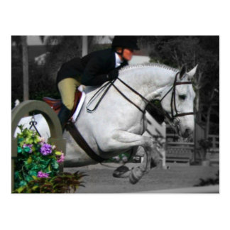 Arabian Horse Jumping Postcard