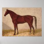 Arabian Horse painting Poster