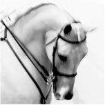 Arabian horse photo sculpture