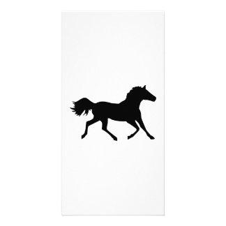 Arabian horse photo card