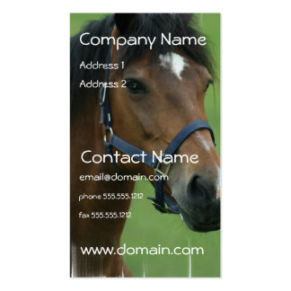Arabian Horse Pictures Business Card