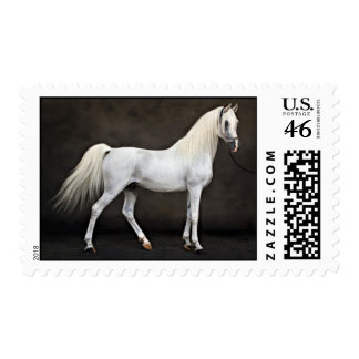 arabian horse postage stamps