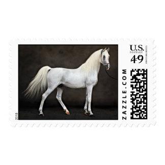 arabian horse postage