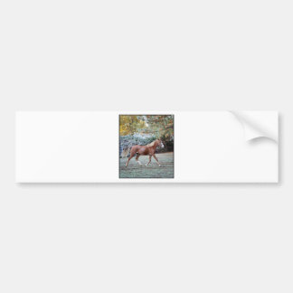 Arabian Horse running free on the pasture Bumper Sticker