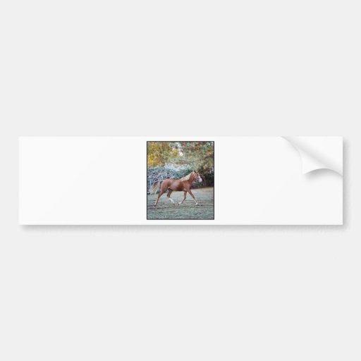 Arabian Horse running free on the pasture Bumper Sticker