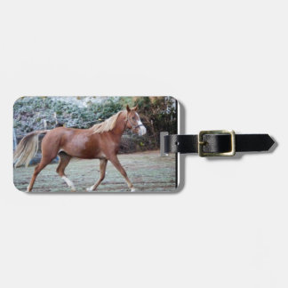 Arabian Horse running free on the pasture Luggage Tag