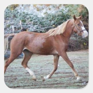 Arabian Horse running free on the pasture Square Sticker