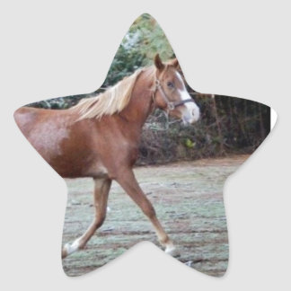 Arabian Horse running free on the pasture Star Sticker