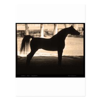 Arabian Horse Silhouette  Sepia Postcard