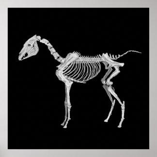Arabian Horse Skeleton Print