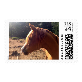 Arabian Horse Stamps