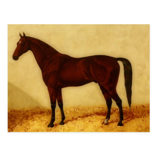 Arabian horse with chestnut coat postcard