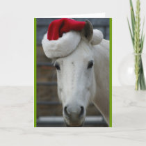 Arabian Horse with Santa Hat Holiday Card