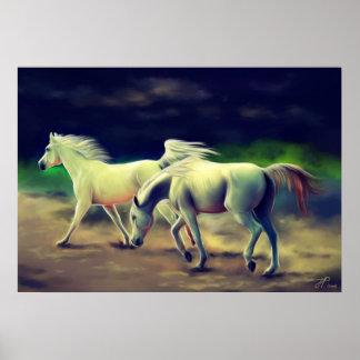 Arabian Horses Posters