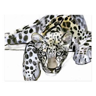Arabian Leopard 2008  6 Postcard