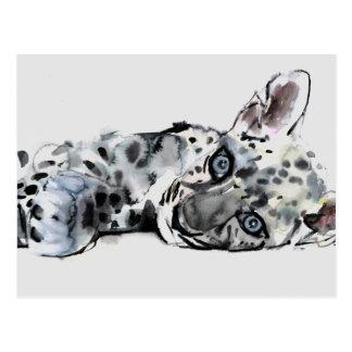 Arabian Leopard Cub 2008 Postcard